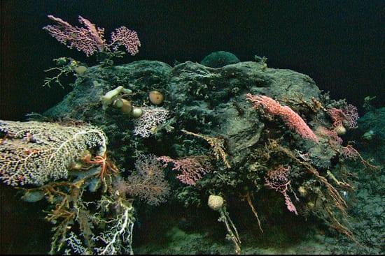 coral_550_57069.jpg