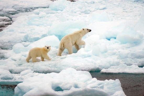 bear_cub_250_60211.jpg