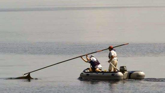 tag-boat-2_250_61876.jpg