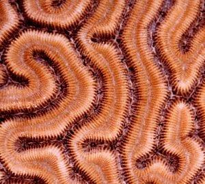 A-maze-ing Corals