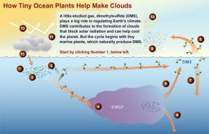 DMS: The Climate Gas You've Never Heard Of