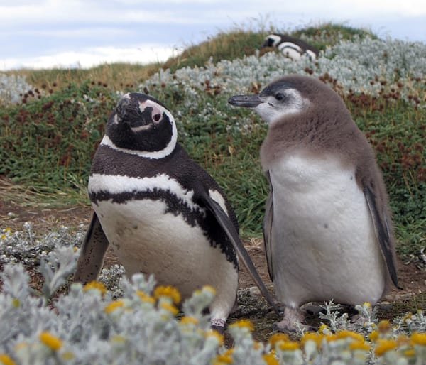 penguins-sm_74449.jpg