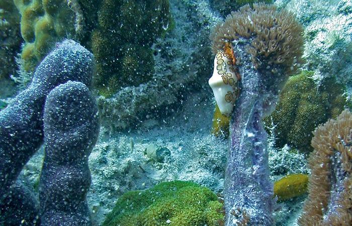 Biochemical Warfare on the Reef