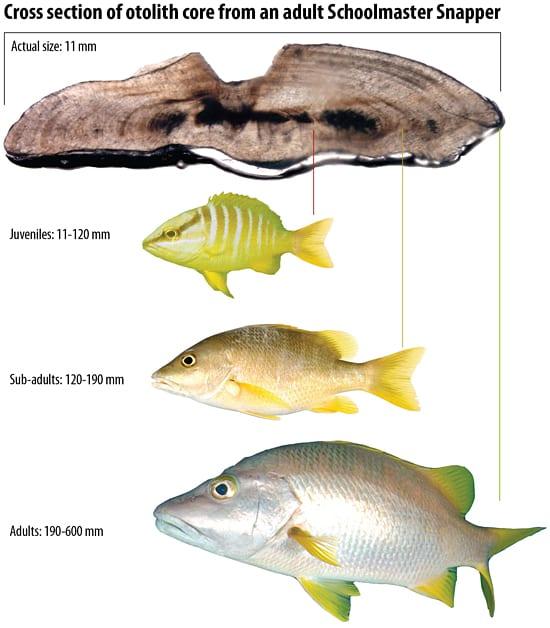 fish_81259.jpg