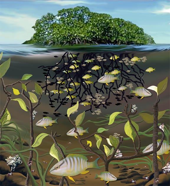 mangrove_81253.jpg