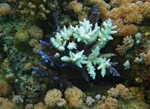 When corals bleach