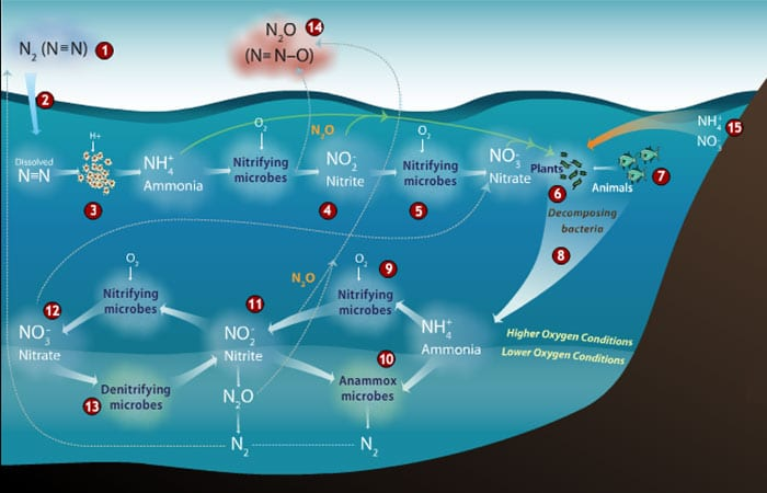 Another Greenhouse Gas to Watch: Nitrous Oxide