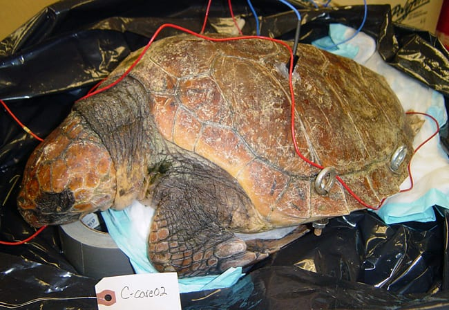 TurtleCcare-250_85421.jpg