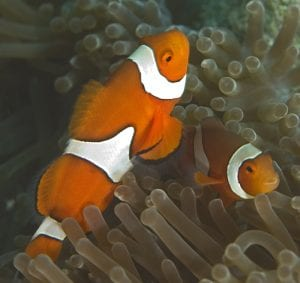 Tracking Nemo and his relatives