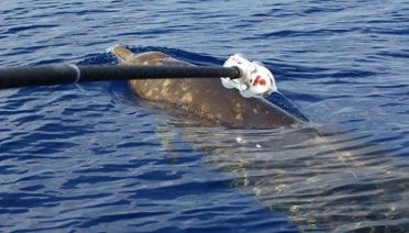 Supreme Court Weighs in on Whales and Sonar