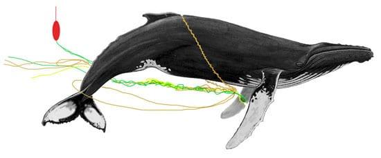 whale1_en_89210.jpg