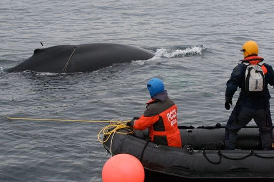 whale2_en_89212.jpg