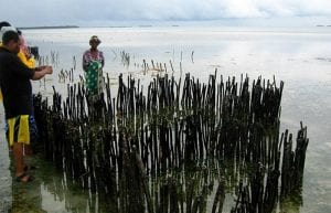 Farming Shellfish in Zanzibar
