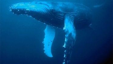 The WHOI Marine Mammal Center Is Born ...