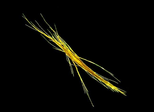 T-erythraeum250_95676.jpg