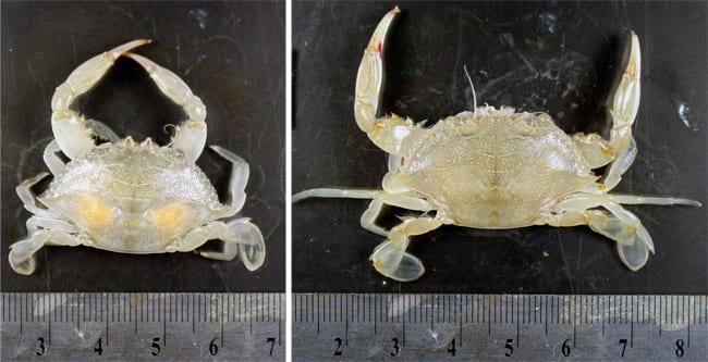 crab250_97011.jpg