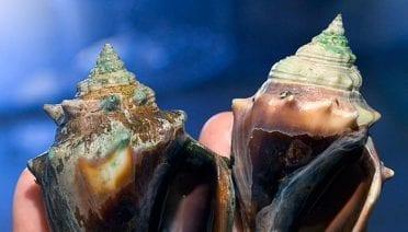 Ocean Acidification: A Risky Shell Game