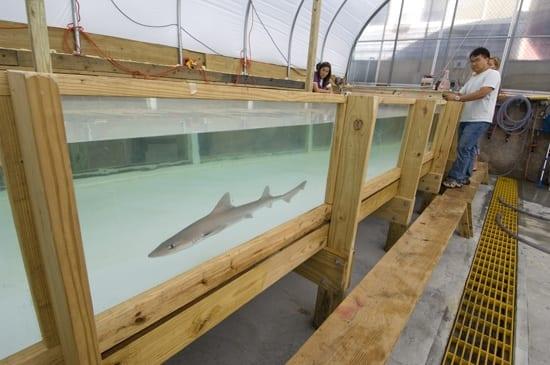 shark testing tank