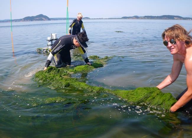 algae250_111679.jpg