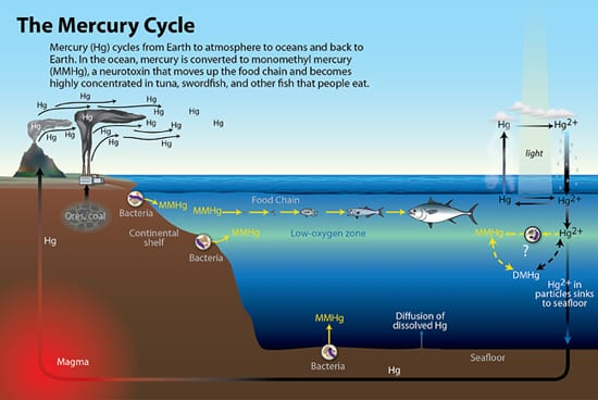 The Mercury Cycle