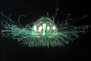 graphics-Jellyfish-2_85901_154673.jpg