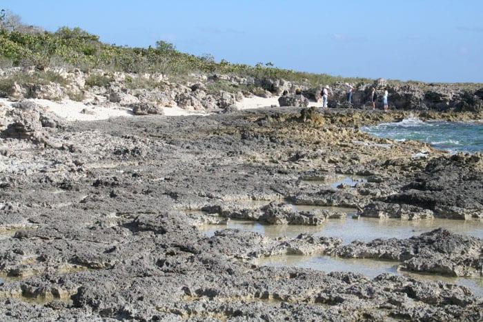Thompson_coral_300_Great_Inagua_fossil_reefs_174593.jpeg