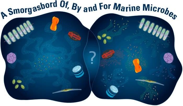 Marine microbe relationships