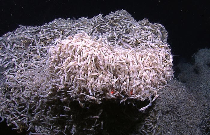 Searching for Life on the Seafloor