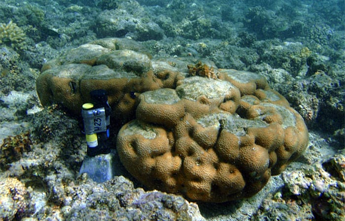 coral_ss12_197653.jpeg