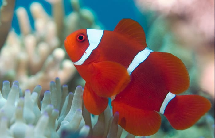 fish_ss11_197553.jpeg