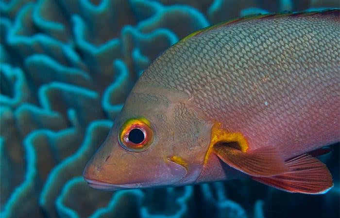 fish_ss2_197473.jpeg