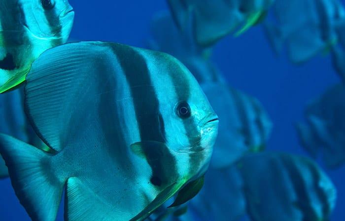 fish_ss3_197418.jpeg