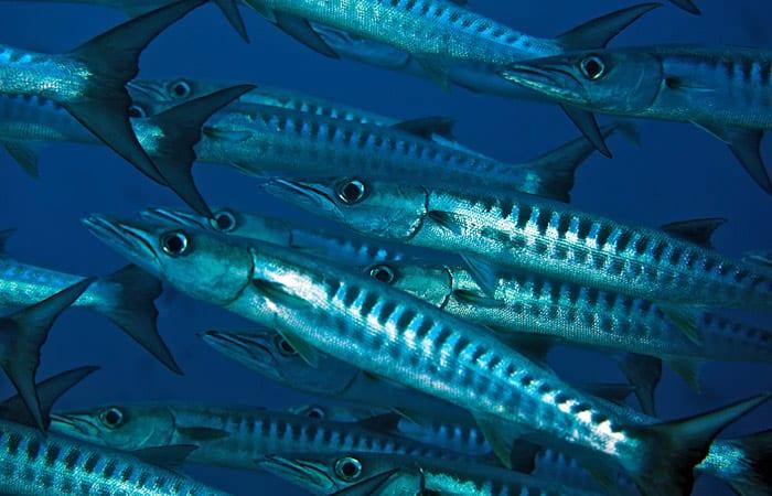 fish_ss4_197438.jpeg