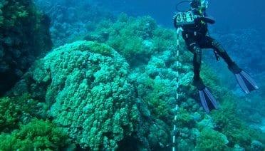 cal-redsea_konrad-diver-measuring-corals_221274.jpeg