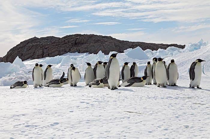 Emperor Penguins & Climate Change