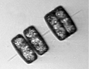 diatom2-n_265693.jpg