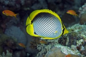 Reef Indicator