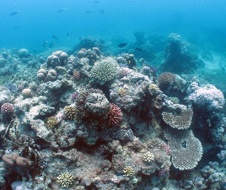 Red_Sea_Reef_750_291093.jpg