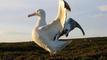 Seabirds Face Risks from Climate Change