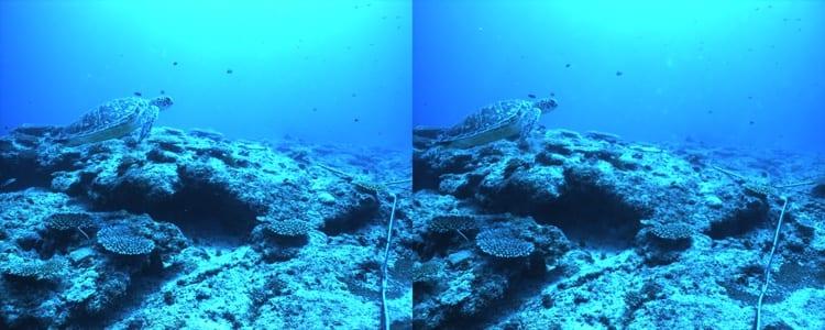 stereo_turtle_350_305273.jpg