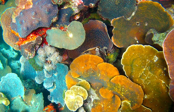 A Quest For Resilient Reefs