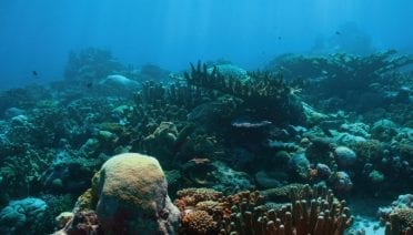 Corals' Indispensable Bacterial Buddies