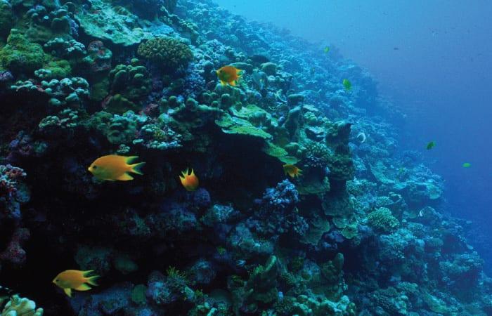 coral4_310617.jpg