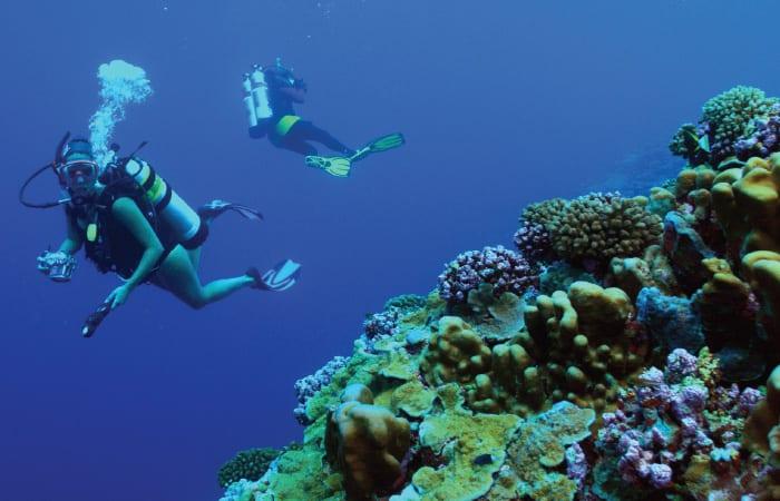 coral5_310619.jpg