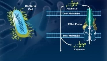 Mining Marine Microbes for New Drugs