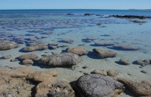 What Doomed the Stromatolites?