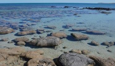 What Doomed the Stromatolites?