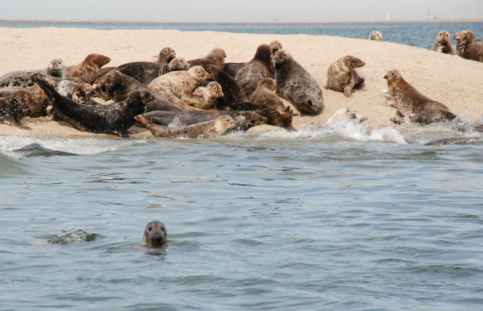 The Return of the Seals