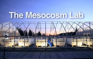 The Mesocosm Lab