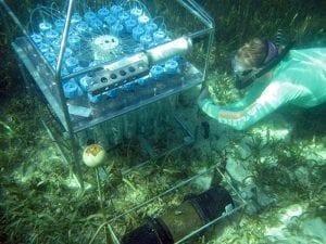 Robotic Reef